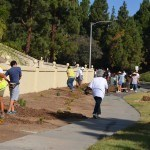 Volunteers planting 1 gallon Lantana's