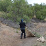 dragging out invasive weeds