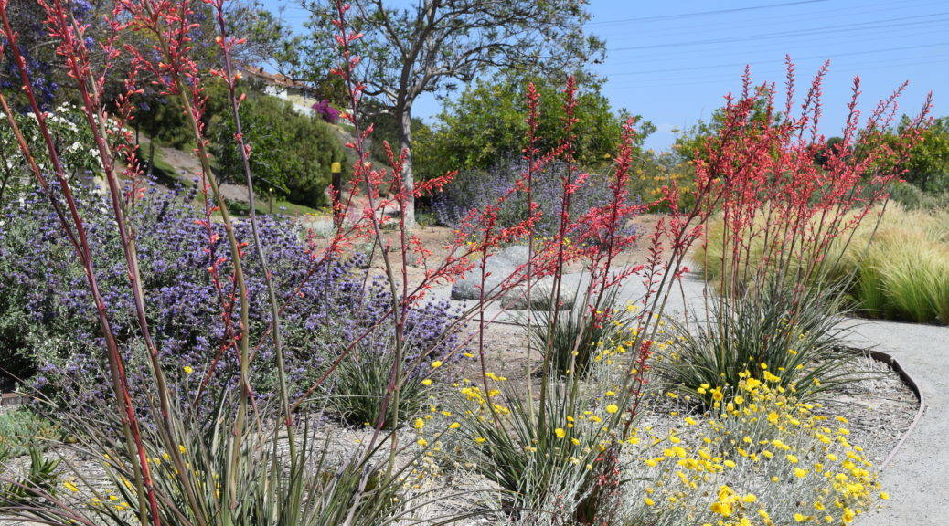 Shade Tolerant Plants Texas