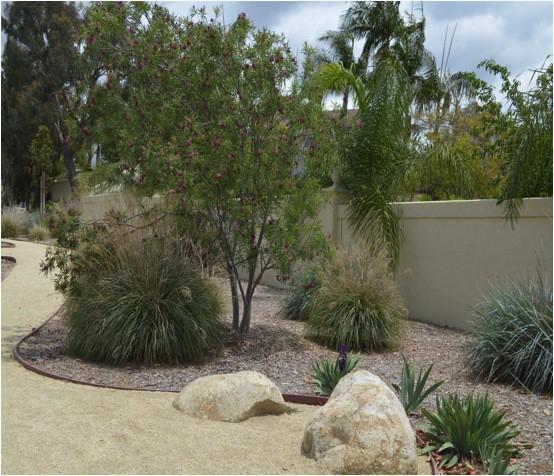 California Native Plant Landscape Design Examples: Gardening With California Natives