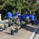 volunteers planting 5 gallon Damianita's
