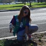 I'll plant the whole flat of Senecio serpens by myself!